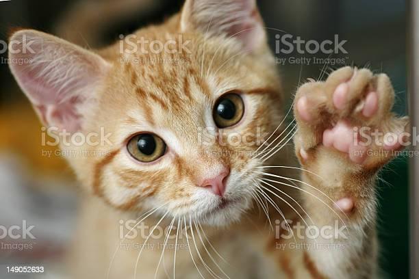 Kitten with his paw up picture id149052633?b=1&k=6&m=149052633&s=612x612&h=eeb6v3vhxgorn0 7shsnbrzrmwnimrfwztq8bhdysha=