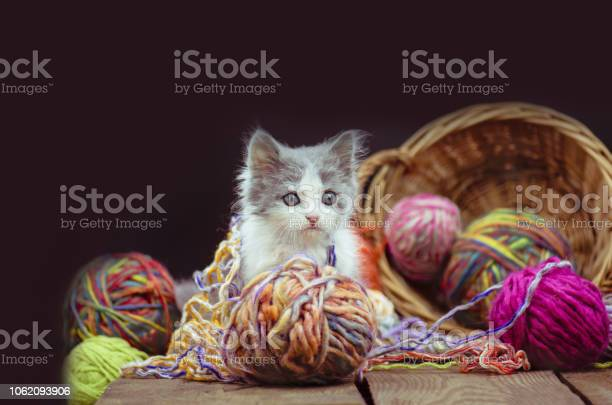 Kitten with knitting ravels in a basket picture id1062093906?b=1&k=6&m=1062093906&s=612x612&h=wnt8hdgfo utmsqtf jwxaadgsk2vwxf4qf0jeczzoc=