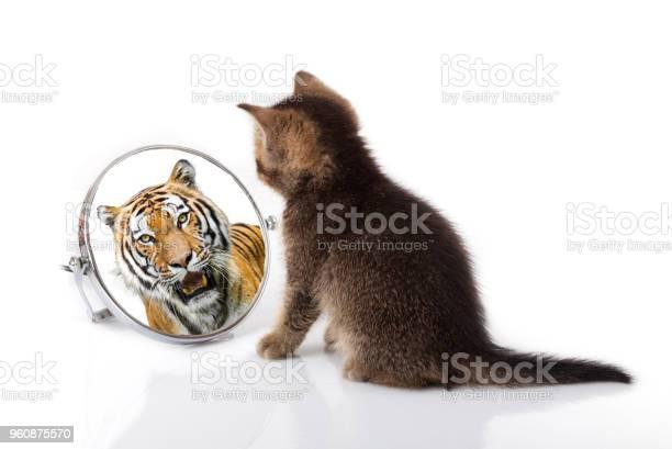 Kitten with mirror on white background kitten looks in a mirror of a picture id960875570?b=1&k=6&m=960875570&s=612x612&h= qkaif6gptkkdrxba40vdeobkytc6xx7o6 pamt0gfi=