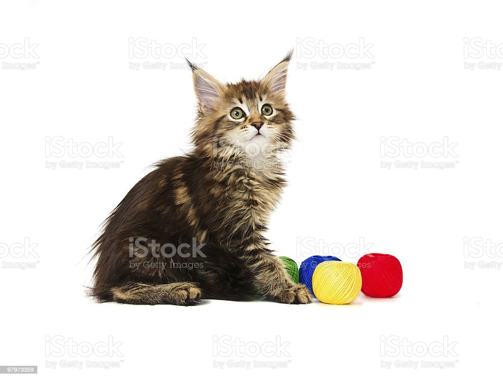 Kitten with multi-coloured balls of threads royalty-free stock photo