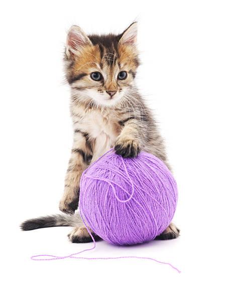 Kitten with purple balls picture id503157374?b=1&k=6&m=503157374&s=612x612&w=0&h=ciihv06leag7fsxb8duvhdxextixl6tggcue7pf 2cq=