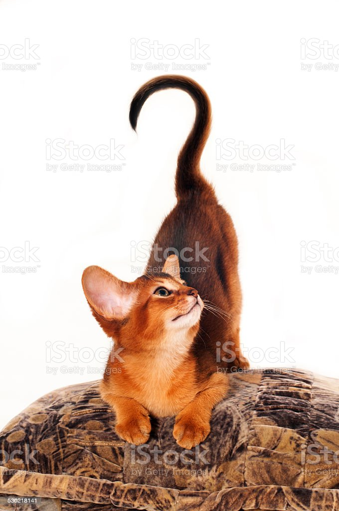 Kitten with question stock photo