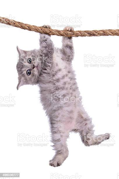 Kitten with rope picture id496036277?b=1&k=6&m=496036277&s=612x612&h=iybbze6t65mvfmm0wlzqtvymf2dhphgyj3v qnnun5o=