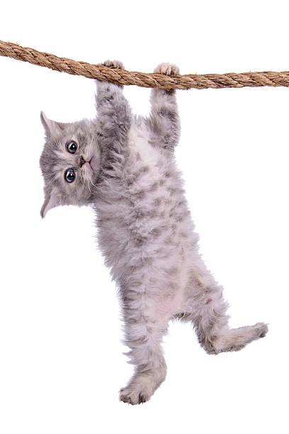 Mascota con cordón - foto de stock