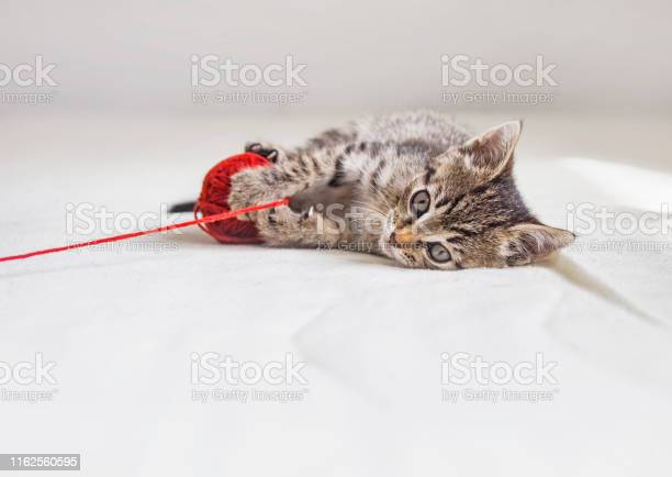 Kitten with tangle of red thread picture id1162560595?b=1&k=6&m=1162560595&s=612x612&h=zrccxibxd plg0grt5coby mkfj es ky 9ol8gea9a=