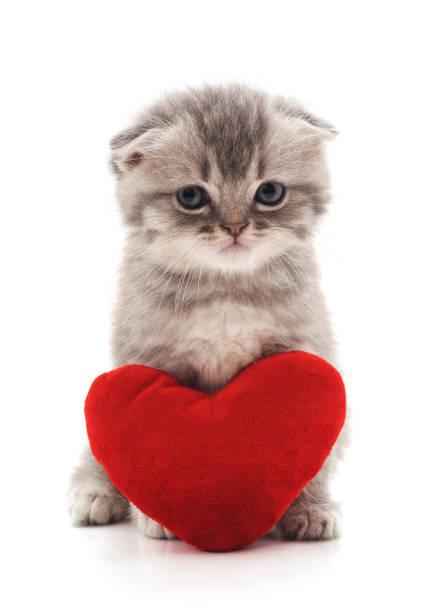Kitten with toy heart picture id1018273272?b=1&k=6&m=1018273272&s=612x612&w=0&h=9ru5salrwfbsv1qu3eoqnmph96ih5c1cwldpzbotp38=