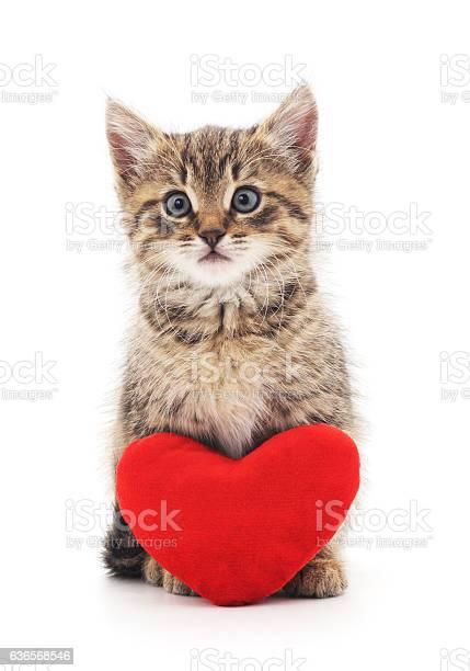 Kitten with toy heart picture id636568546?b=1&k=6&m=636568546&s=612x612&h=k7uw48yxvhetq8aigzrljjwxya6vqaycvyn47usyvui=