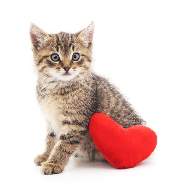 Kitten with toy heart picture id639635476?b=1&k=6&m=639635476&s=612x612&w=0&h=2vnsqgqqody2xzqbarwwmzzuy1sd9iue1uhbohg6nu0=