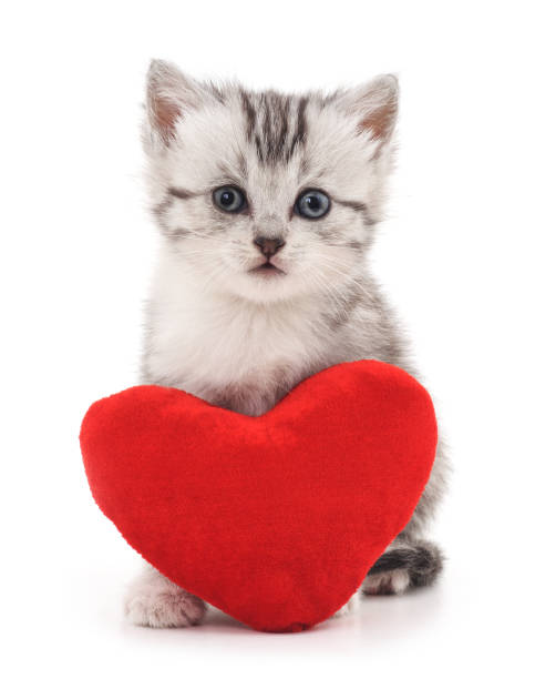 Kitten with toy heart. Kitten with toy heart isolated on a white background. kitten cute valentines day domestic cat stock pictures, royalty-free photos & images