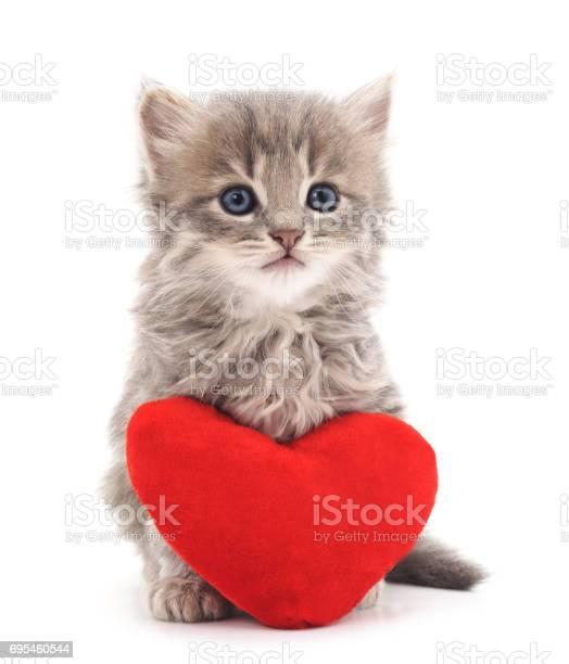 Kitten with toy heart picture id695460544?b=1&k=6&m=695460544&s=612x612&h=blfdpqvfxkiuqsnvft7 ndoxkt47l3 llis2k1wm ze=