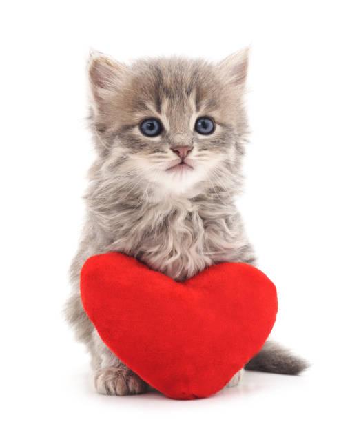 Kitten with toy heart picture id695460544?b=1&k=6&m=695460544&s=612x612&w=0&h=31vscjkcuilvgoshdfbwiibetv5y qzek1fypaznmle=