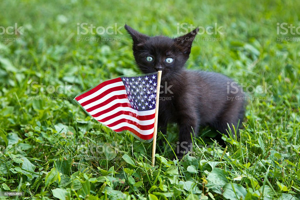 Kitten with US flag stock photo