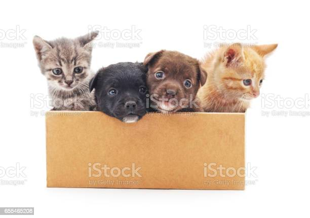 Kittens and a puppies in a box picture id655465208?b=1&k=6&m=655465208&s=612x612&h=a9gzsxbsopzujvfxvidka4ms6tattuuflufplmfvbok=