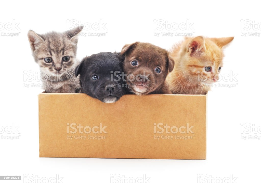 Kittens and a puppies in a box. stock photo