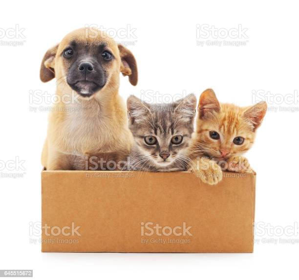Kittens and a puppy in a box picture id645515672?b=1&k=6&m=645515672&s=612x612&h=8wnwjag6l81chhylwq49vohdeen8rfdhu2bih zzics=