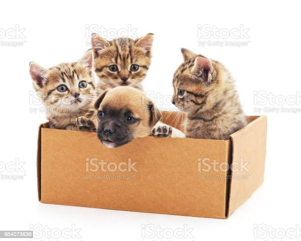 Kittens and a puppy in a box picture id654073636?b=1&k=6&m=654073636&s=612x612&h=rjdexwgm2k1busirsdbf8asdxq0fzy4dddbap5gvhye=