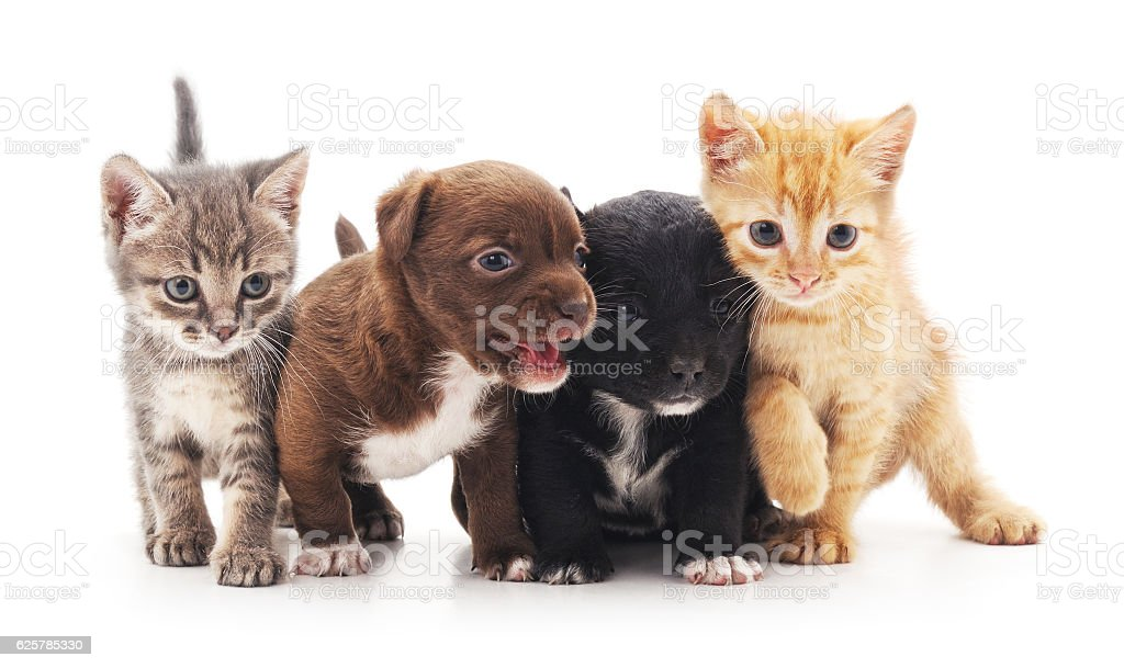 Kittens and puppies. stock photo