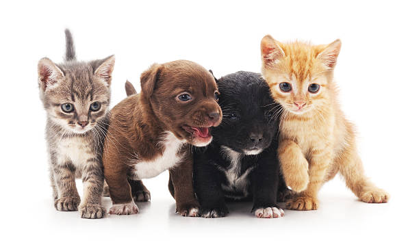 kittens and puppies. - kitten stock photos and pictures