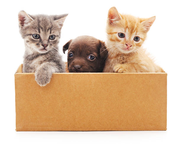 Kittens and puppy in a box picture id576904216?b=1&k=6&m=576904216&s=612x612&w=0&h=9ebqbzagstsh5nhqsre18o fs7rdfelgswjsvtscrgw=