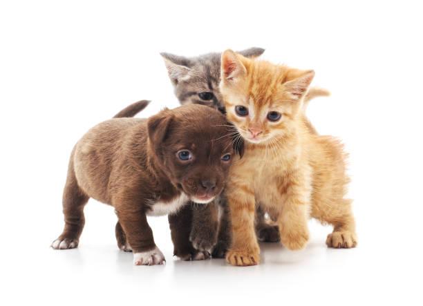Kittens and puppy picture id1091686056?b=1&k=6&m=1091686056&s=612x612&w=0&h=febm5zn0an8tnp1hhmezsdpplbfrxmm1nb cnpfg2ek=