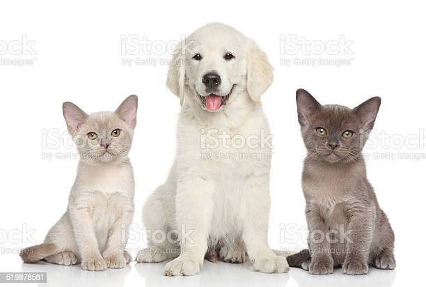 Kittens and puppy picture id519978581?b=1&k=6&m=519978581&s=612x612&h=7zox48milxdt5ir83x5 xtkndjqhvhr8u6zna4aog e=