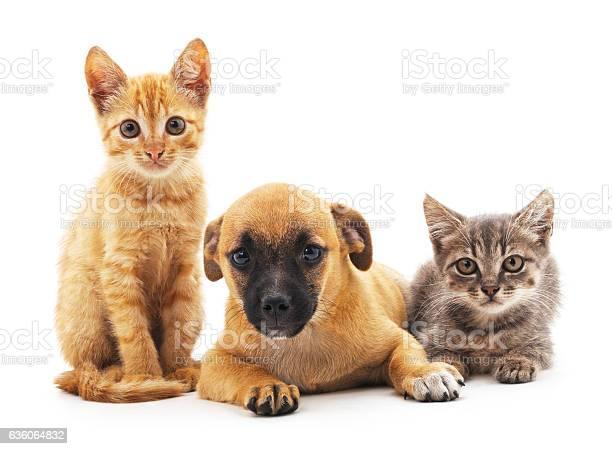 Kittens and puppy picture id636064832?b=1&k=6&m=636064832&s=612x612&h=gqowfyirfq2 7a0ei8wz  okwzfitvf3yrkzznsdjzg=