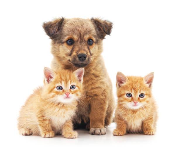 Kittens and puppy picture id695461842?b=1&k=6&m=695461842&s=612x612&w=0&h=tt5cqd4wexleniujseccqae2okms 6idooowzvctrv4=