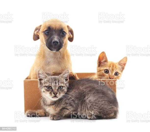 Kittens and puppy picture id844085210?b=1&k=6&m=844085210&s=612x612&h=tzirubarj67hugkbya6oq7euiszv9gmvhfskxijle0w=