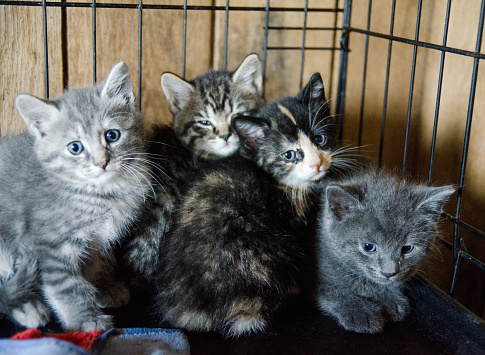 Kittens At Animal Shelter Stock Photo - Download Image Now
