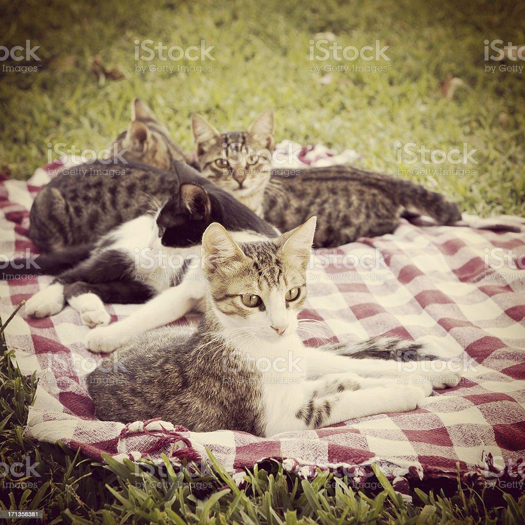 Kittens at the picnic royalty-free stock photo