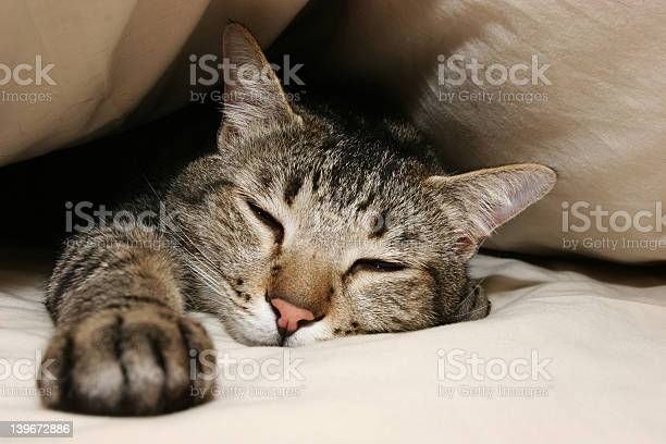 Kittens day off picture id139672886?b=1&k=6&m=139672886&s=612x612&h=viqyaalpyvew0bfxd 7mlxtb7eg7xykqdt0bvzqj2qu=