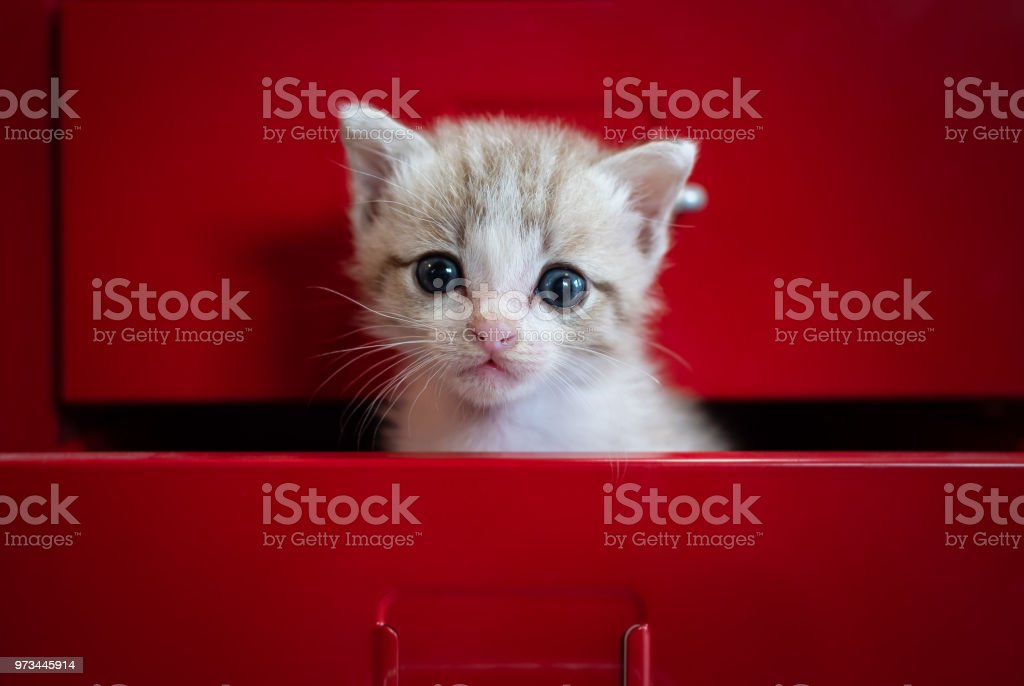 Kittens fear Hidden in red drawer Look at the camera.