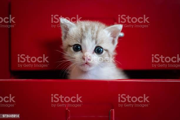 Kittens fear hidden in red drawer look at the camera picture id973445914?b=1&k=6&m=973445914&s=612x612&h=adlpe4o6rnmceu7mxko2a1rnvfjhr1bchquuqgenzum=