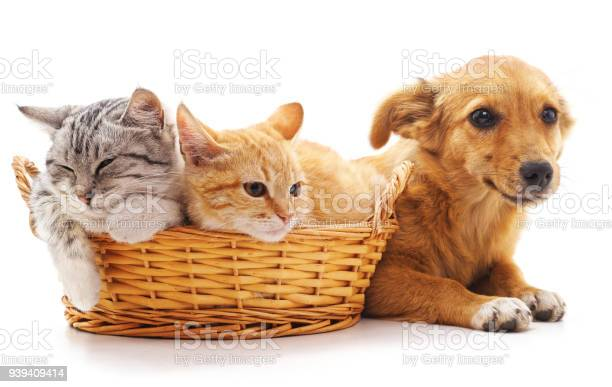 Kittens in a basket and puppy picture id939409414?b=1&k=6&m=939409414&s=612x612&h=1nb04ahkf8mxg0snrlnyokyzmzfly2le72dgkh3jsem=