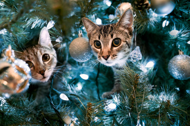 kittens in a christmas tree - котик яркий стоковые фото и изображения