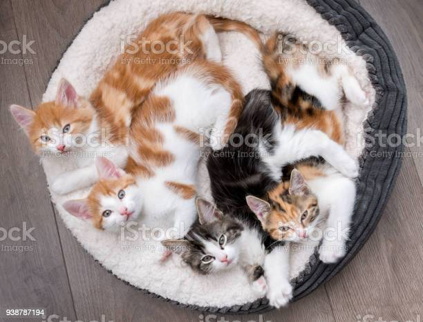 Kittens in a fluffy white bed picture id938787194?b=1&k=6&m=938787194&s=612x612&h=4n m3pugdaxpgh4bc8jwfqw58j  v6cvz tzwhncfdm=