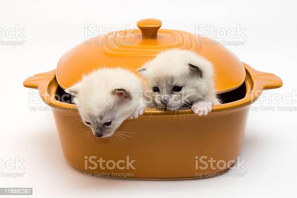 Kittens in a pot picture id178392261?b=1&k=6&m=178392261&s=612x612&h=dqa0h4hxouqx3svn4bvq3ytvzoc wyl9eosxfsqi 1m=