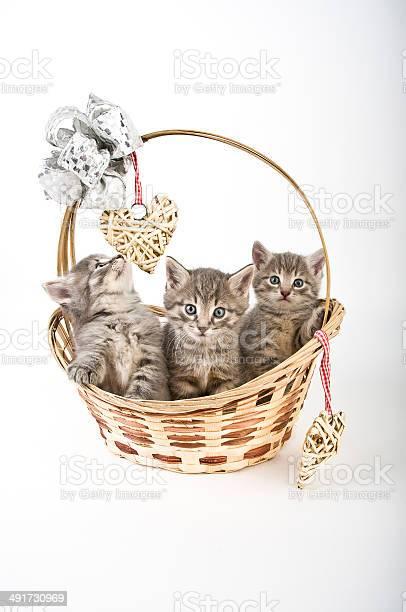Kittens in basket picture id491730969?b=1&k=6&m=491730969&s=612x612&h=y5rwonpwcfjuylbb zingflyqz124dddwipvcvd9fti=