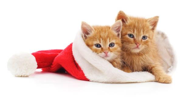 Kittens in christmas hat picture id867912102?b=1&k=6&m=867912102&s=612x612&w=0&h=lkv2bzr93hgwobbcerssweogg2t vkgadzrtpefgfnc=