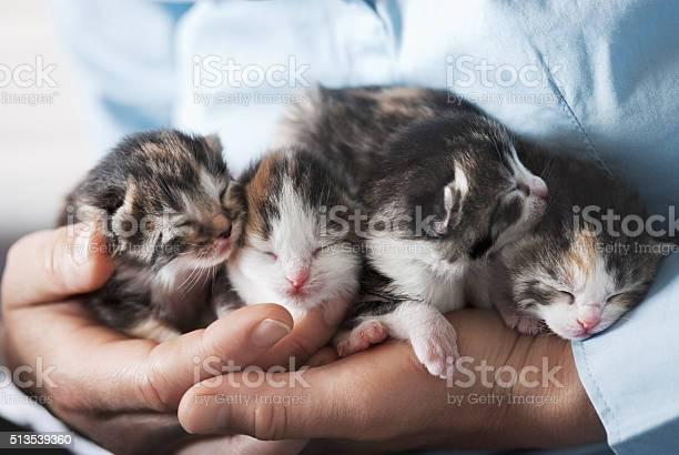 Kittens in hands picture id513539360?b=1&k=6&m=513539360&s=612x612&h= vhsdbvij molufo0y 3lrcil35coaw57alaf2e7ou4=