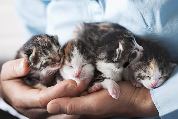 Kittens in hands picture id513539360?b=1&k=6&m=513539360&s=612x612&w=0&h= 3wx8pczedhlcwjvkkuqfuw0njzdc2kxmxlthtsd020=