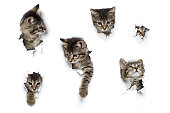 istock Kittens in holes 647416446