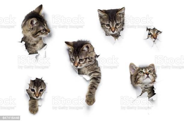 Kittens in holes picture id647416446?b=1&k=6&m=647416446&s=612x612&h=hbehon5ejblzzbdn4b0epvjmbky5dfknrpnz1wqzvwc=