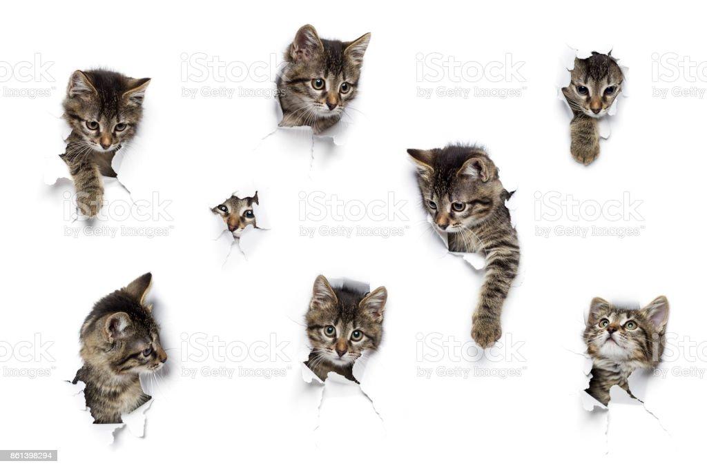Gatitos en los agujeros - foto de stock