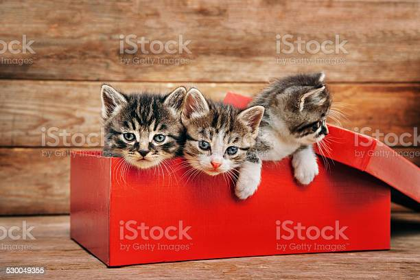 Kittens in the box picture id530049355?b=1&k=6&m=530049355&s=612x612&h=3kpryuyg2v9wltr8zeivhjqduei1c7vrs7lafi8wzog=