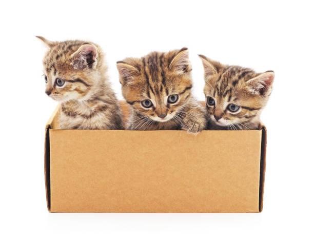 Kittens in the box picture id870873758?b=1&k=6&m=870873758&s=612x612&w=0&h=zwsfxp6qll2jodfi5zek fzgklpnskry u dklg xvo=