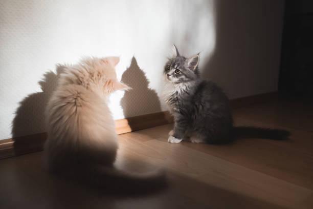 Kittens in the sunlight picture id1135779574?b=1&k=6&m=1135779574&s=612x612&w=0&h=vhv 7duzuuo3b7itagzkyeubtba8jpeta9bpxqwrmlc=