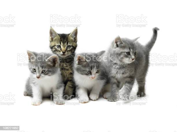 Kittens isolated on white picture id108221652?b=1&k=6&m=108221652&s=612x612&h=icsadywje3xuyncdjvantwihmxv tc16yhrtswq9vcu=