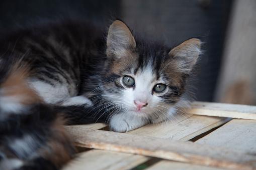 Kitten's look