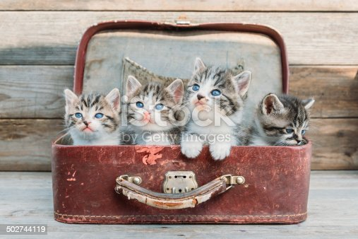 Kittens in retro suitcase on a wooden background